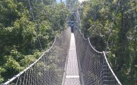 a rope bridge above trees